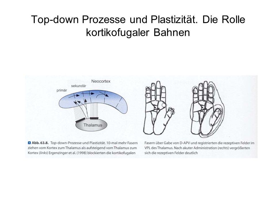 Top-down Prozesse und Plastizität. Die Rolle kortikofugaler Bahnen