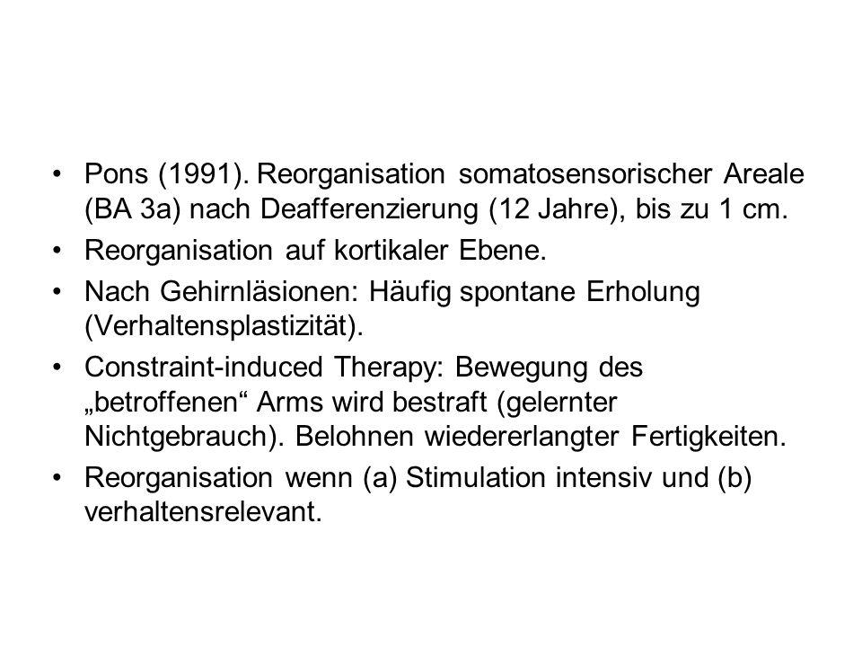 Pons (1991). Reorganisation somatosensorischer Areale (BA 3a) nach Deafferenzierung (12 Jahre), bis zu 1 cm.