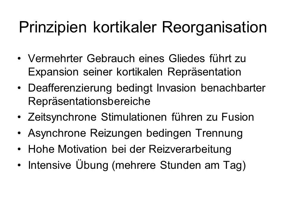 Prinzipien kortikaler Reorganisation