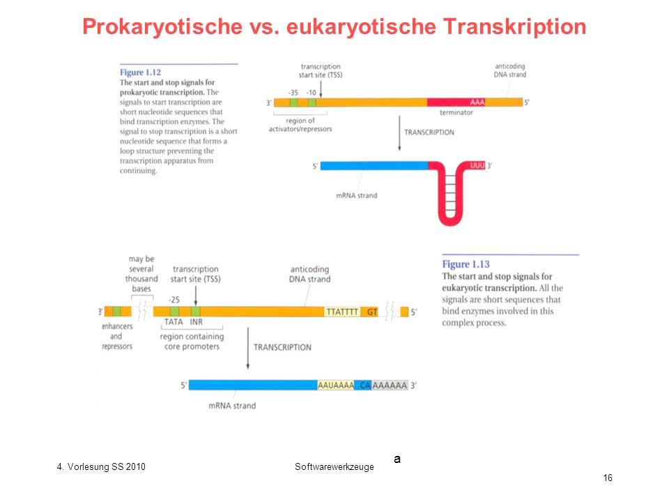 Prokaryotische vs. eukaryotische Transkription