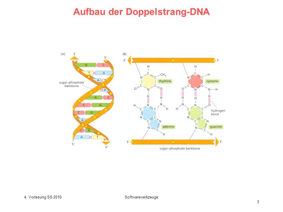Aufbau der Doppelstrang-DNA
