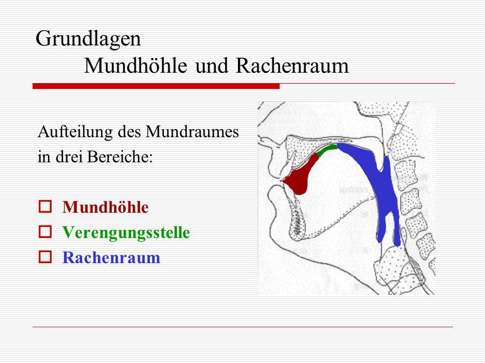 Grundlagen Mundhöhle und Rachenraum