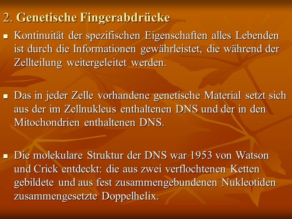2. Genetische Fingerabdrücke