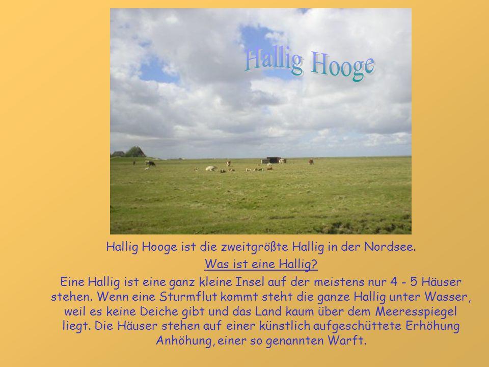 Hallig Hooge ist die zweitgrößte Hallig in der Nordsee.