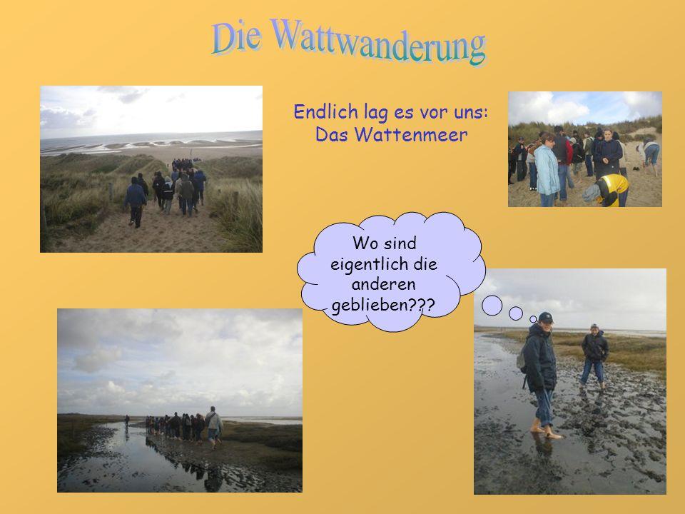 Die Wattwanderung Endlich lag es vor uns: Das Wattenmeer