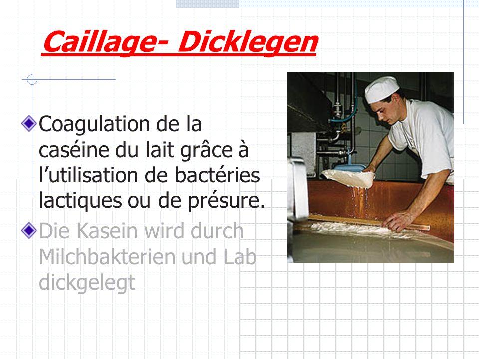 Caillage- Dicklegen Coagulation de la caséine du lait grâce à l'utilisation de bactéries lactiques ou de présure.