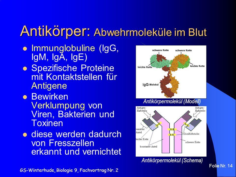 Antikörper: Abwehrmoleküle im Blut