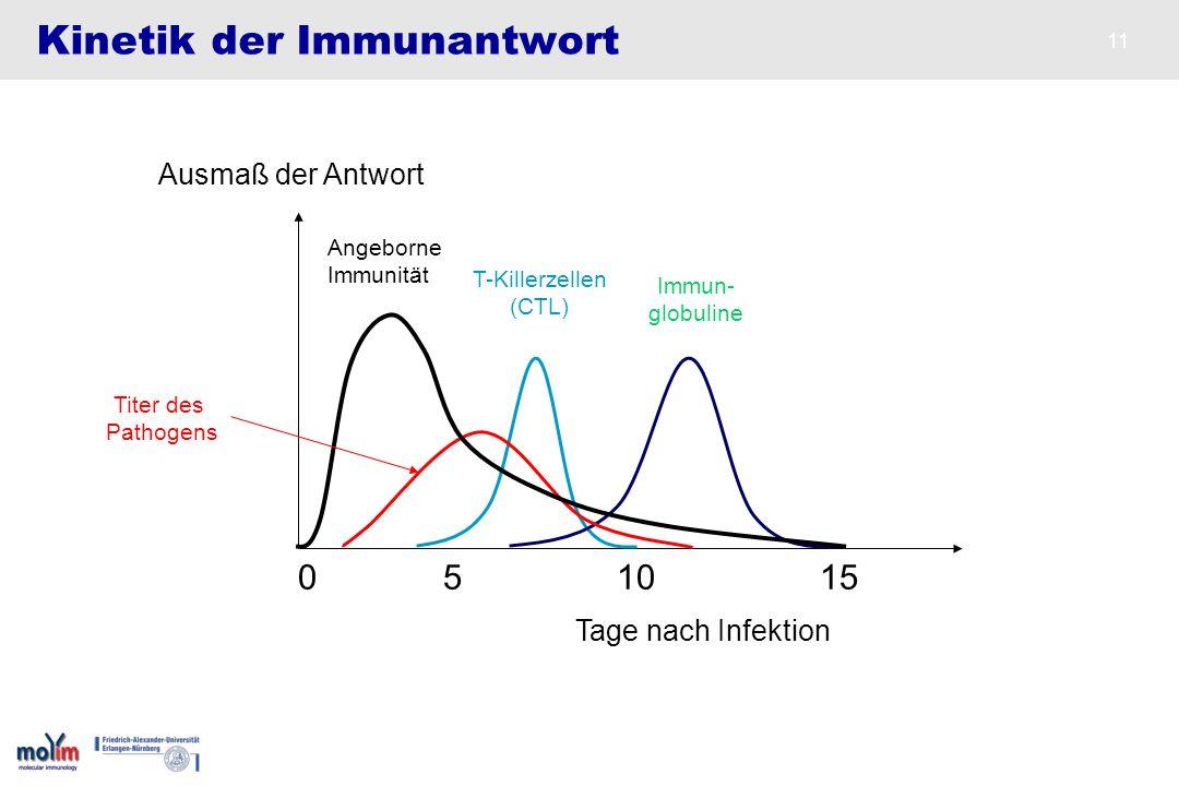 Kinetik der Immunantwort