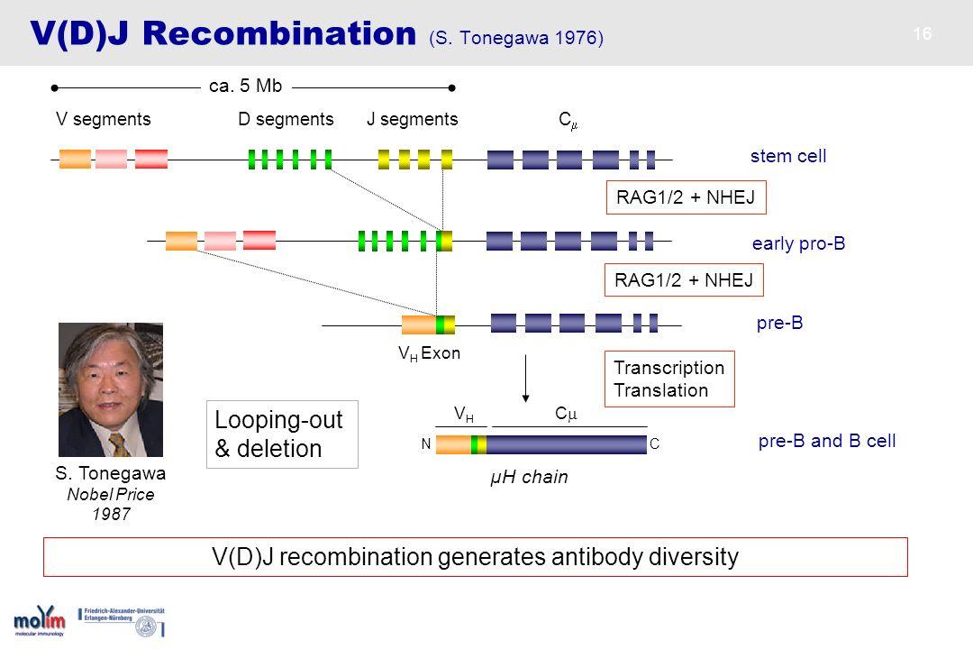V(D)J Recombination (S. Tonegawa 1976)