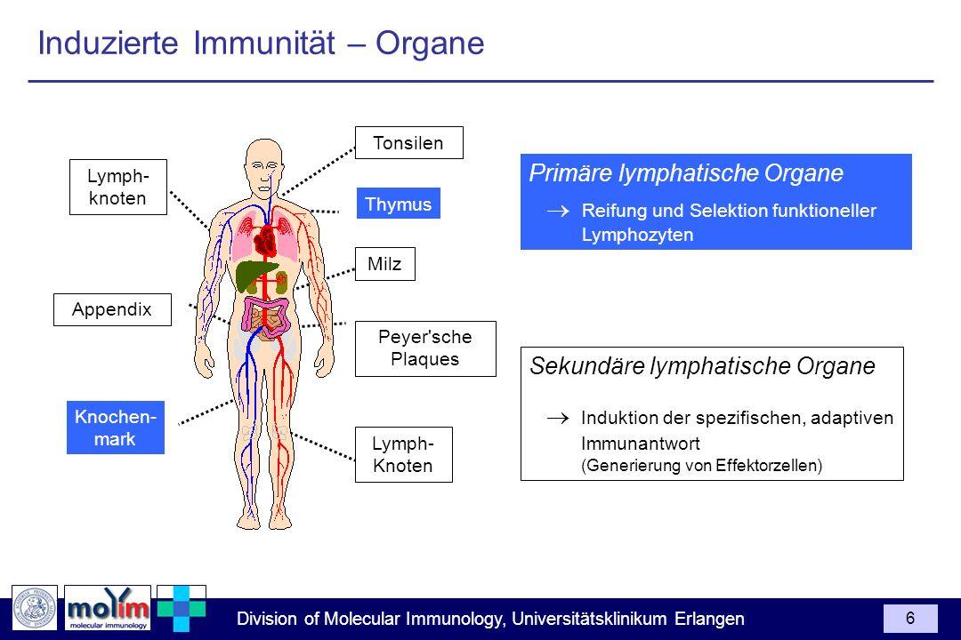 Induzierte Immunität – Organe