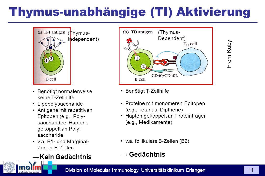 Thymus-unabhängige (TI) Aktivierung