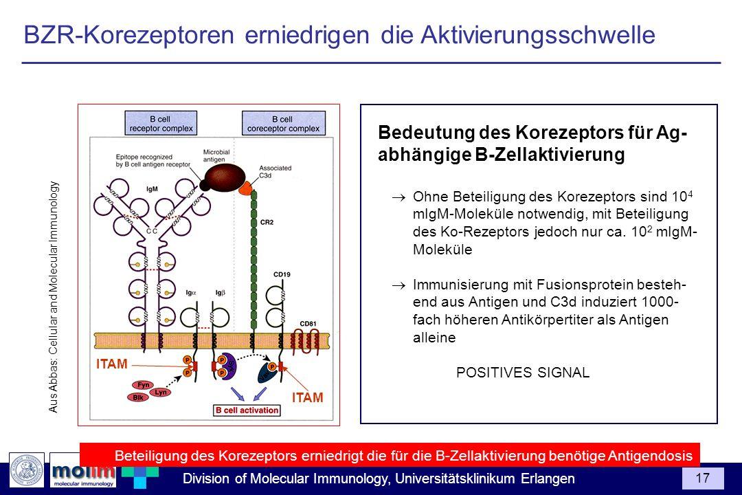 BZR-Korezeptoren erniedrigen die Aktivierungsschwelle