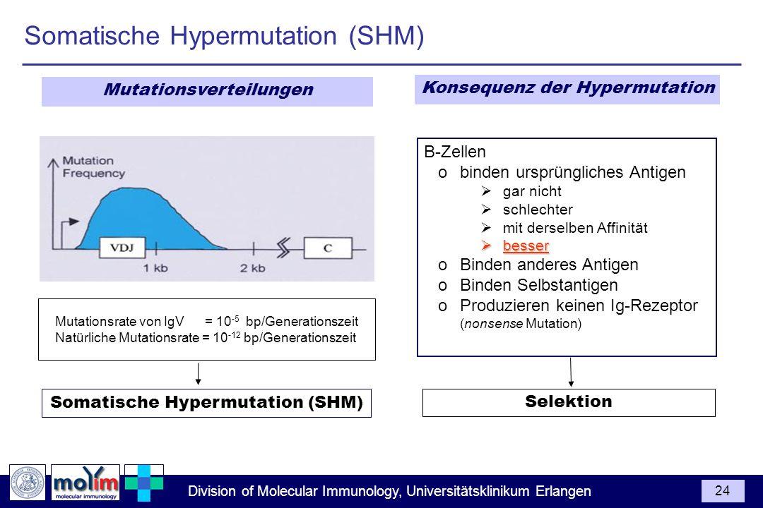 Somatische Hypermutation (SHM)