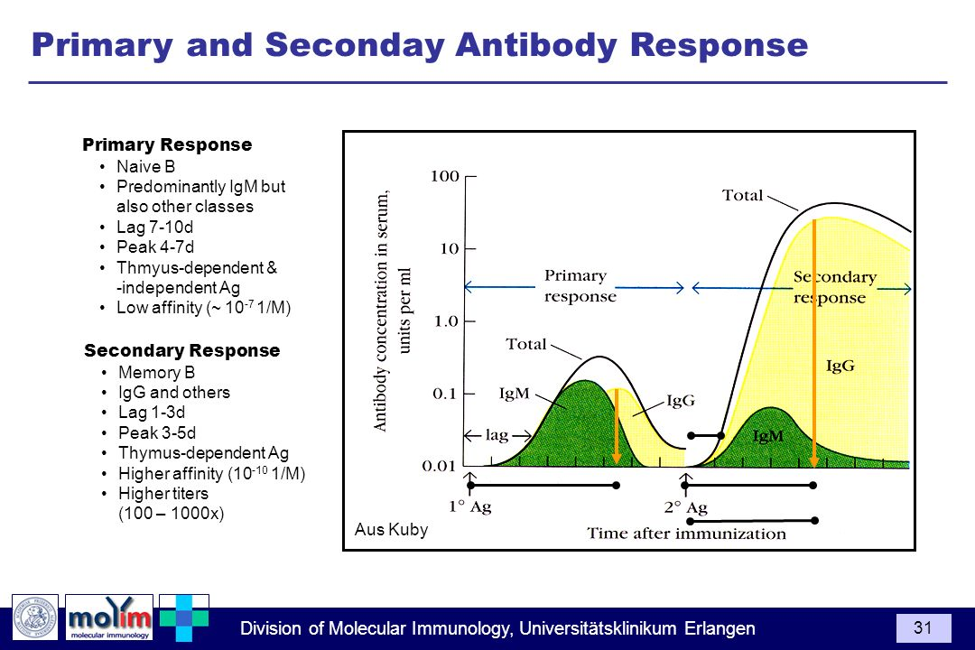 Primary and Seconday Antibody Response