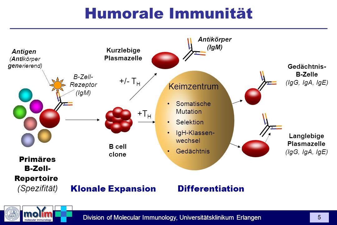 Humorale Immunität +/- TH Keimzentrum +TH (Spezifität)