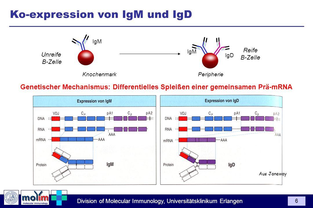 Ko-expression von IgM und IgD