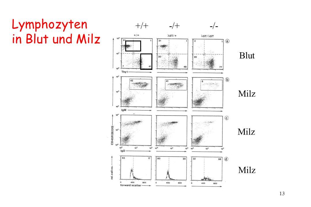 Lymphozyten in Blut und Milz +/+ -/+ -/- Blut Milz Milz Milz