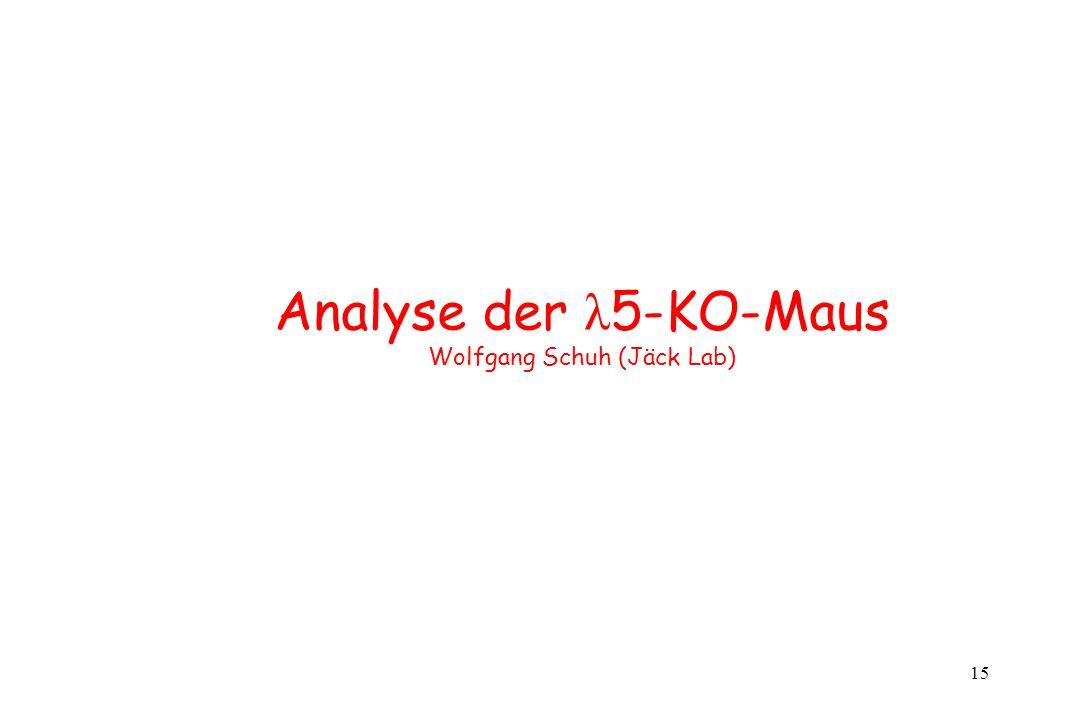 Analyse der λ5-KO-Maus Wolfgang Schuh (Jäck Lab)