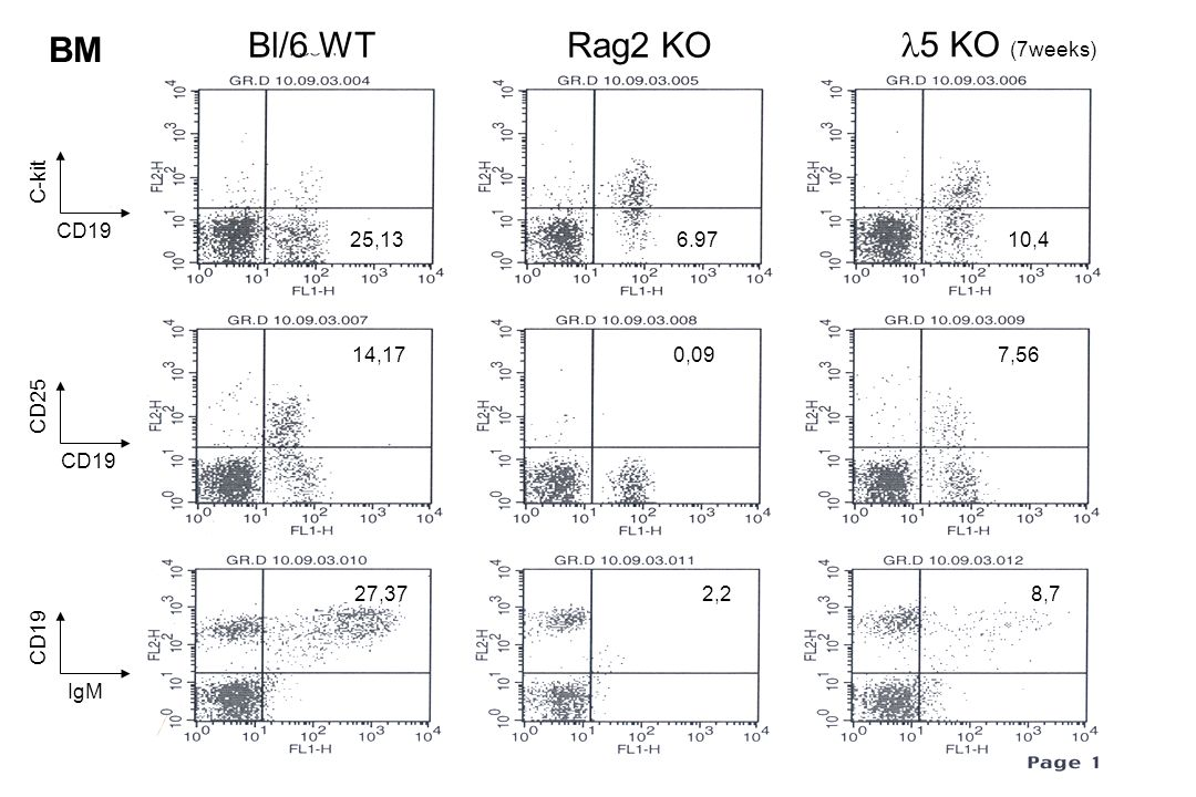 BM Bl/6 WT Rag2 KO l5 KO (7weeks) C-kit CD19 25,13 6.97 10,4 14,17