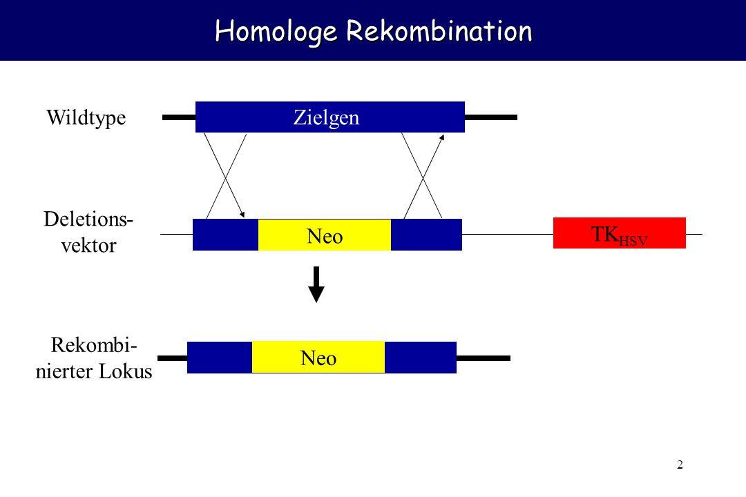 Homologe Rekombination