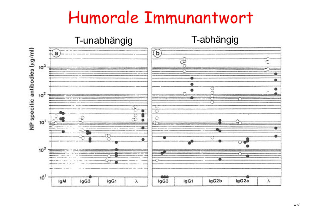 Humorale Immunantwort