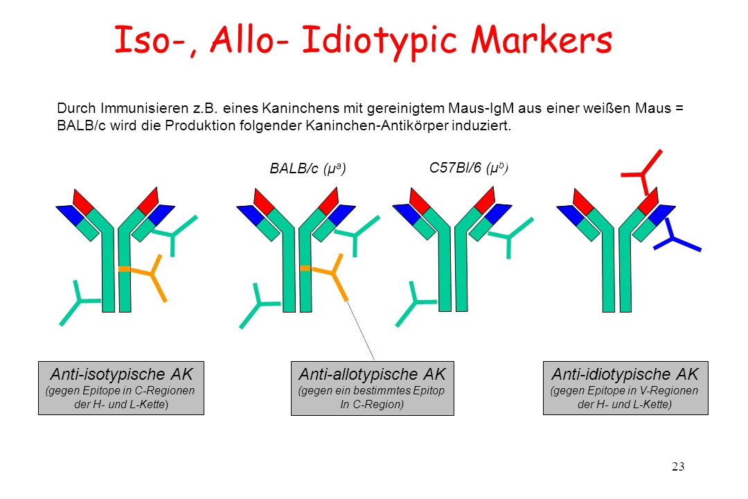 Iso-, Allo- Idiotypic Markers