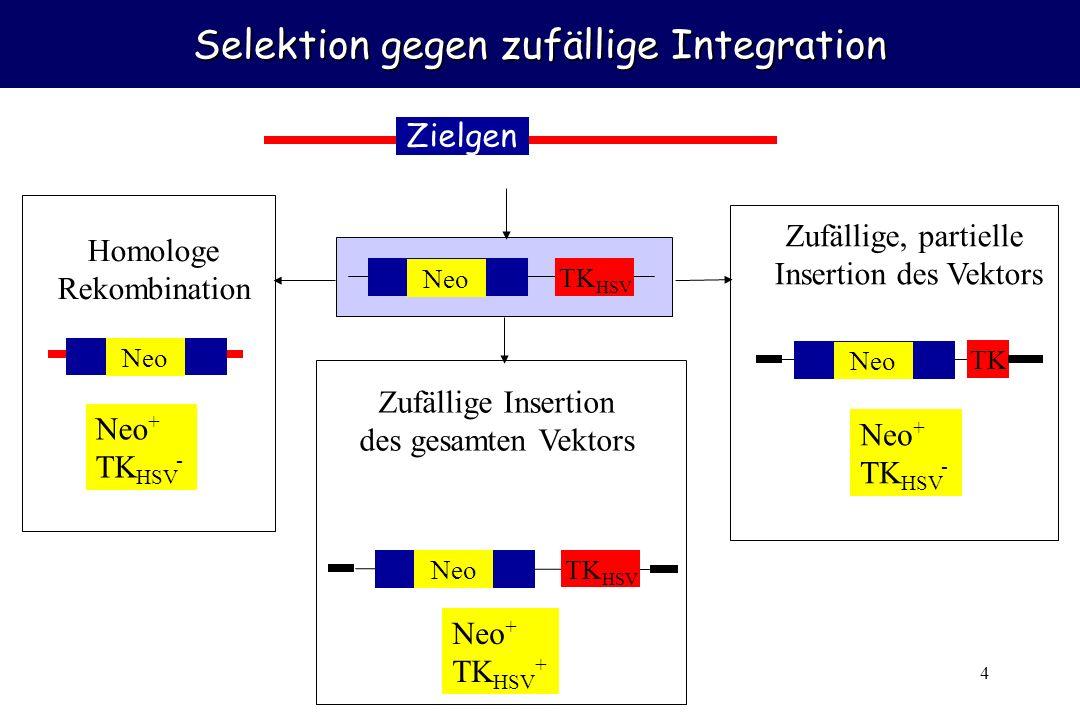 Selektion gegen zufällige Integration