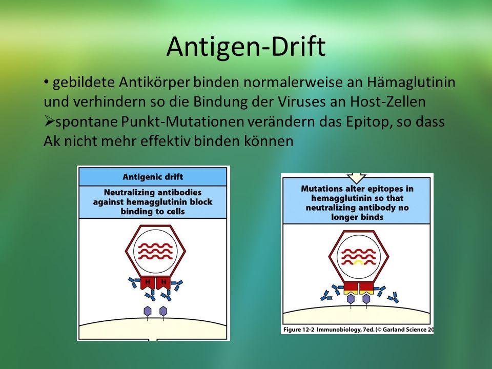 Antigen-Drift gebildete Antikörper binden normalerweise an Hämaglutinin und verhindern so die Bindung der Viruses an Host-Zellen.