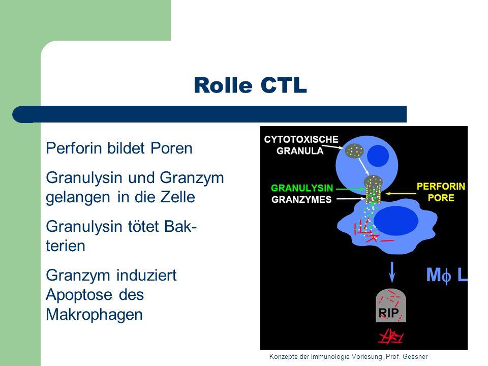 Rolle CTL Perforin bildet Poren