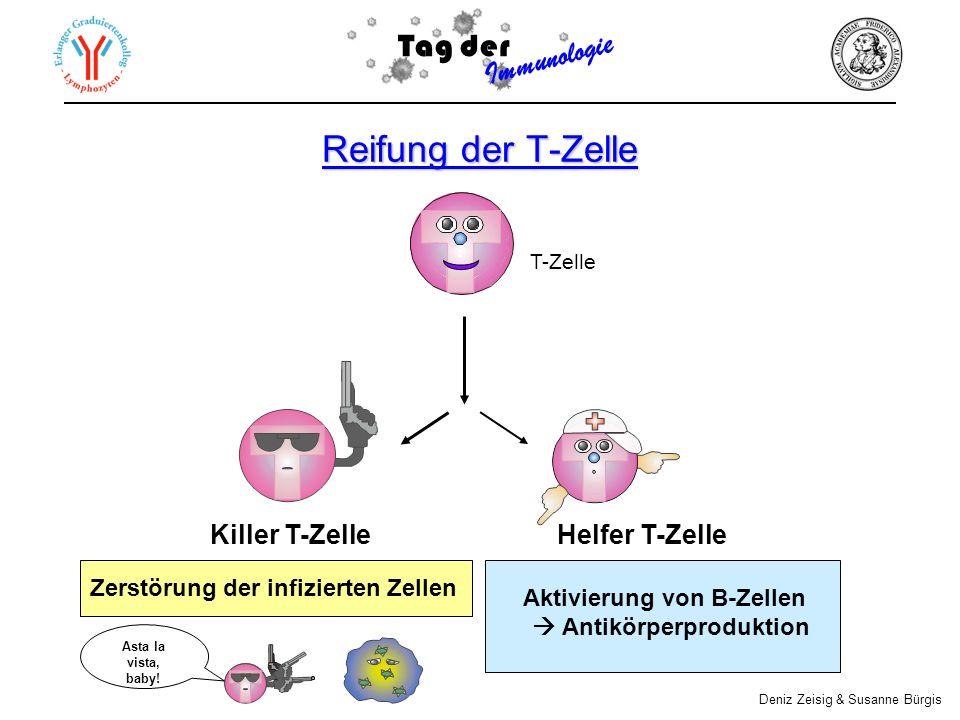 Reifung der T-Zelle Tag der Immunologie Killer T-Zelle Helfer T-Zelle