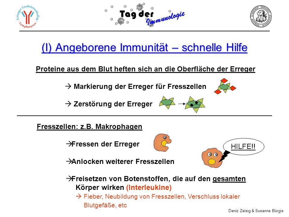 (I) Angeborene Immunität – schnelle Hilfe