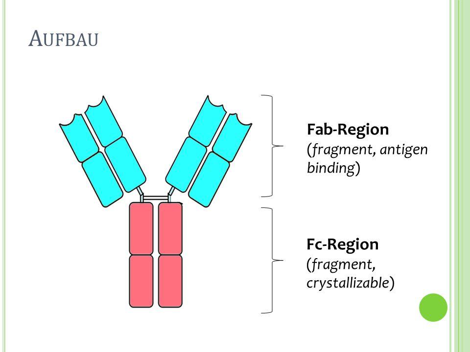 Aufbau Fab-Region Fc-Region (fragment, antigen binding)