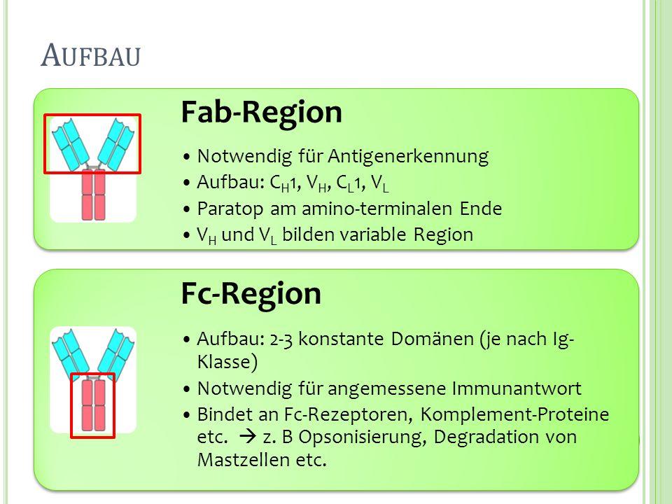 Aufbau Fab-Region Fc-Region Notwendig für Antigenerkennung
