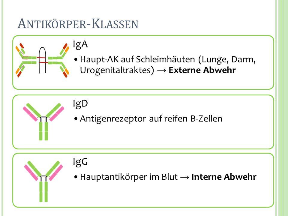 Antikörper-Klassen IgA IgD IgG