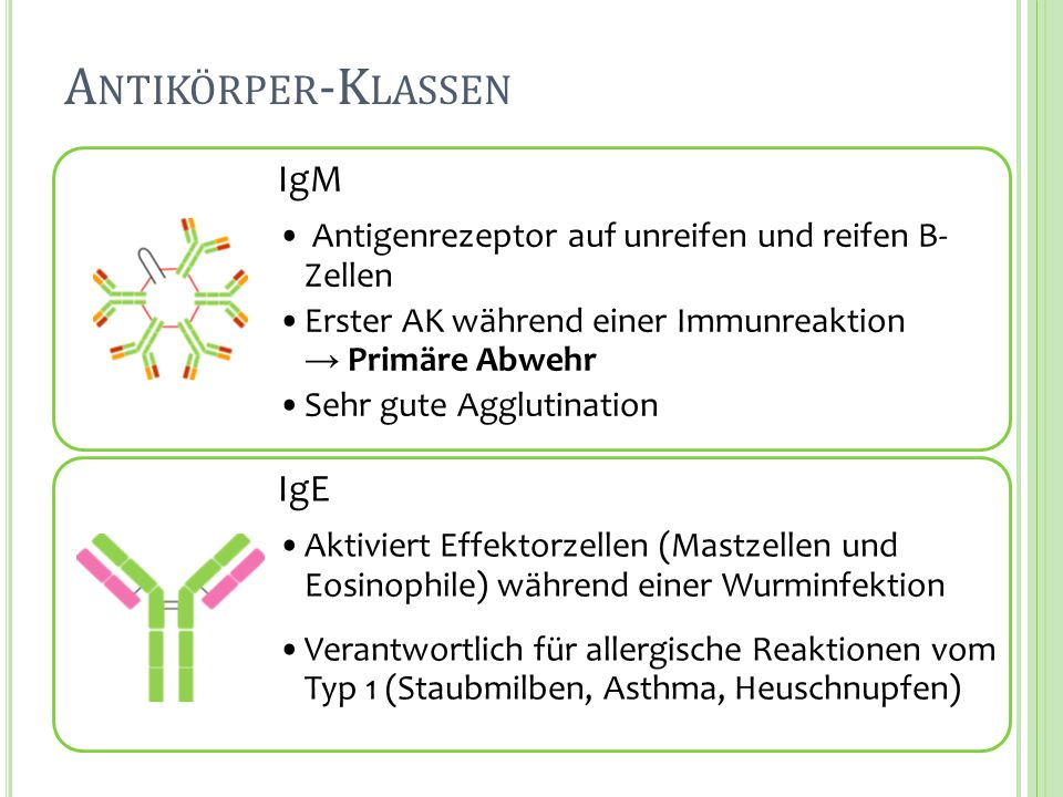 Antikörper-Klassen IgM IgE