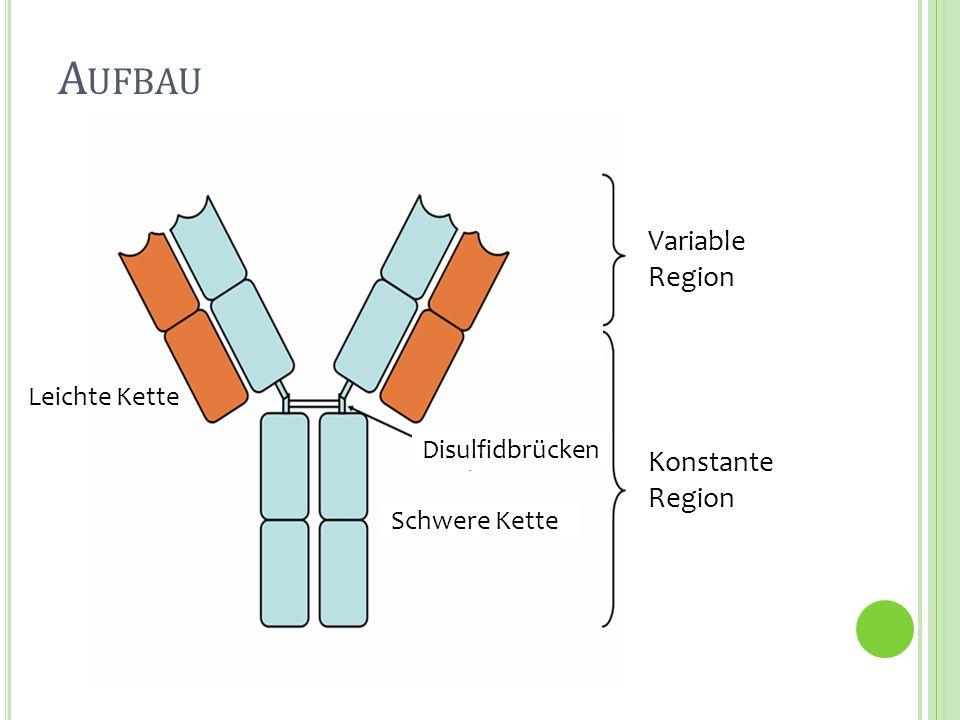 Aufbau Variable Region Konstante Region Leichte Kette Disulfidbrücken