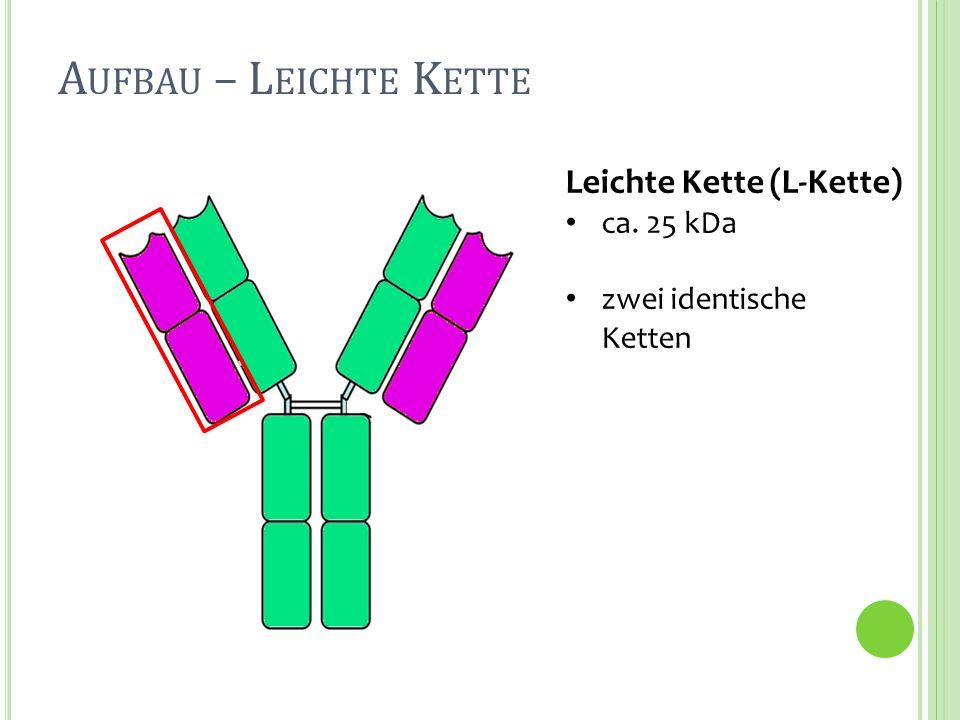 Aufbau – Leichte Kette Leichte Kette (L-Kette) ca. 25 kDa