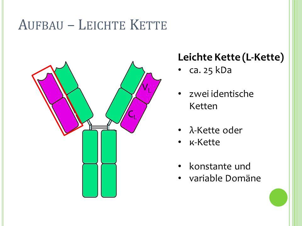 Aufbau – Leichte Kette Leichte Kette (L-Kette) VL CL ca. 25 kDa