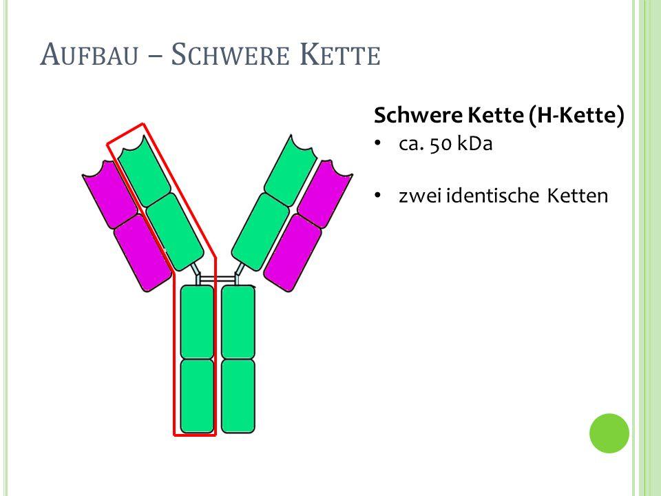Aufbau – Schwere Kette Schwere Kette (H-Kette) ca. 50 kDa