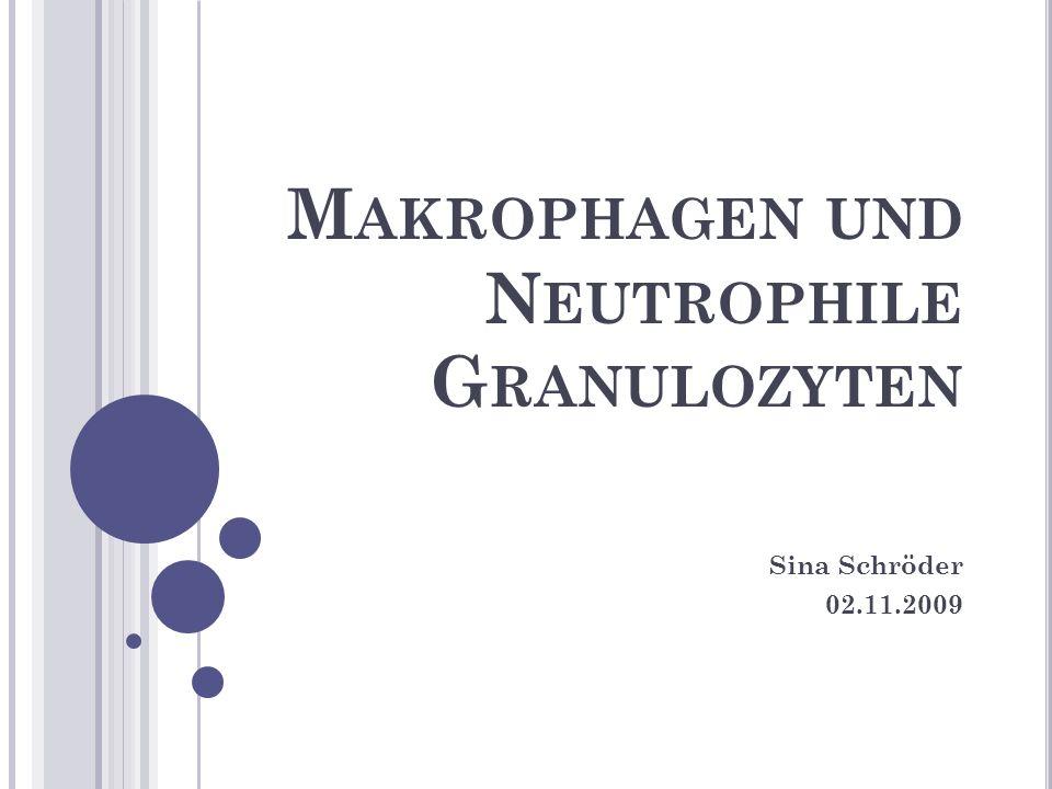 Makrophagen und Neutrophile Granulozyten
