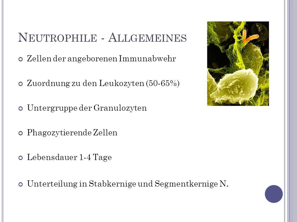 Neutrophile - Allgemeines