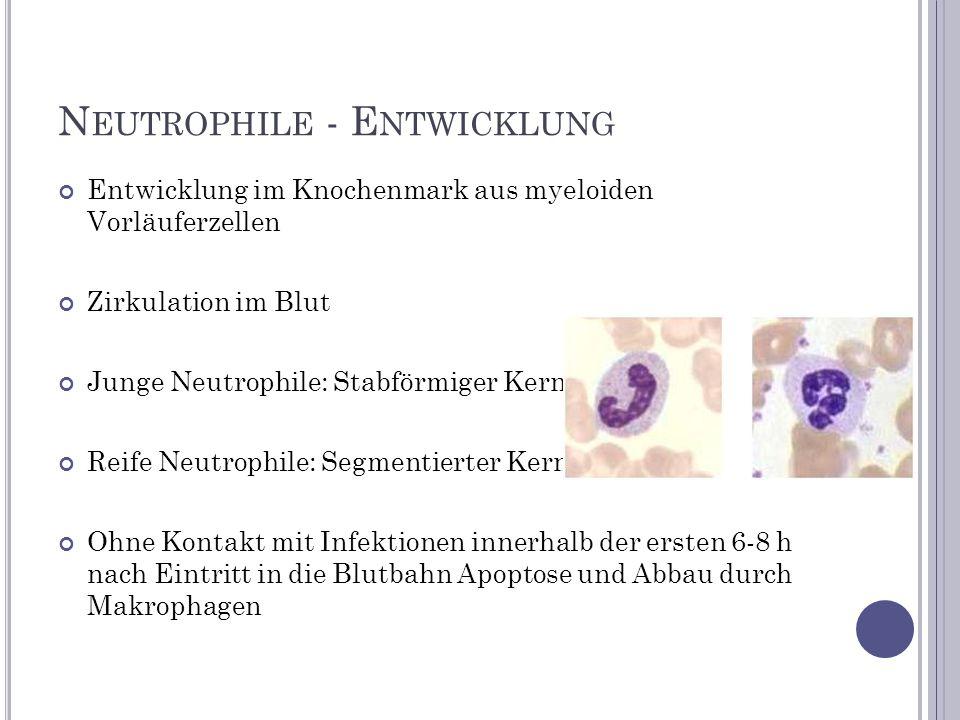 Neutrophile - Entwicklung