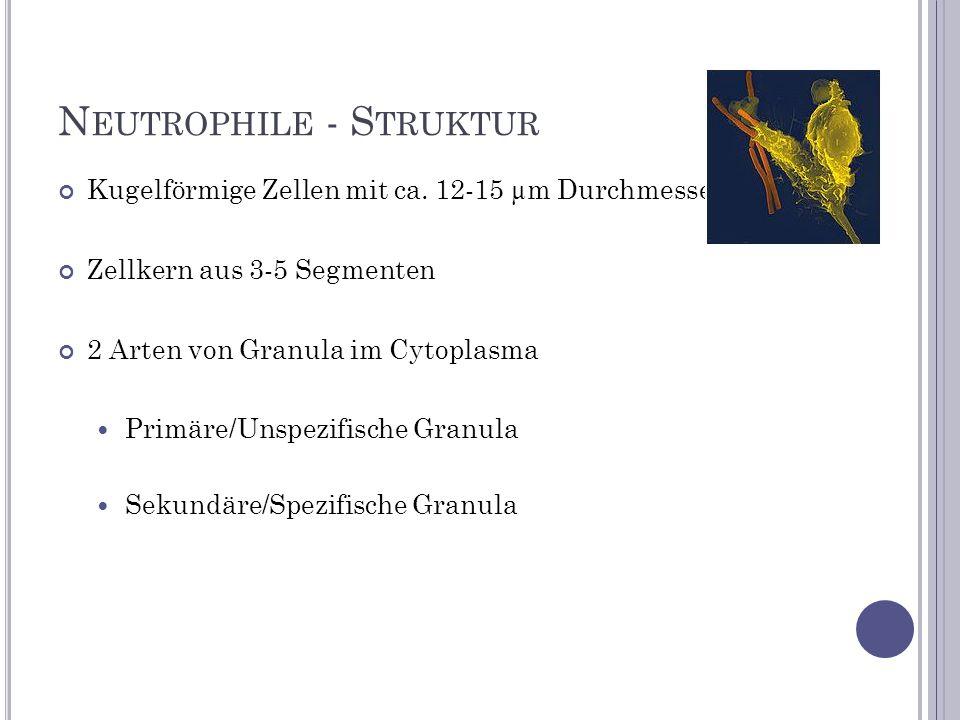 Neutrophile - Struktur