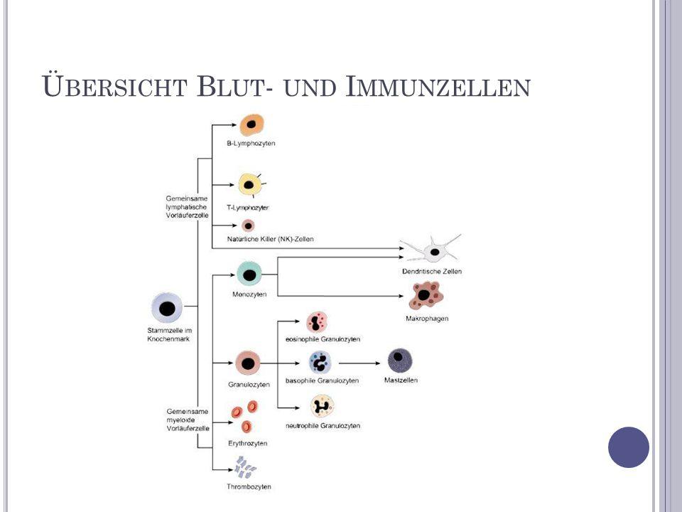 Übersicht Blut- und Immunzellen