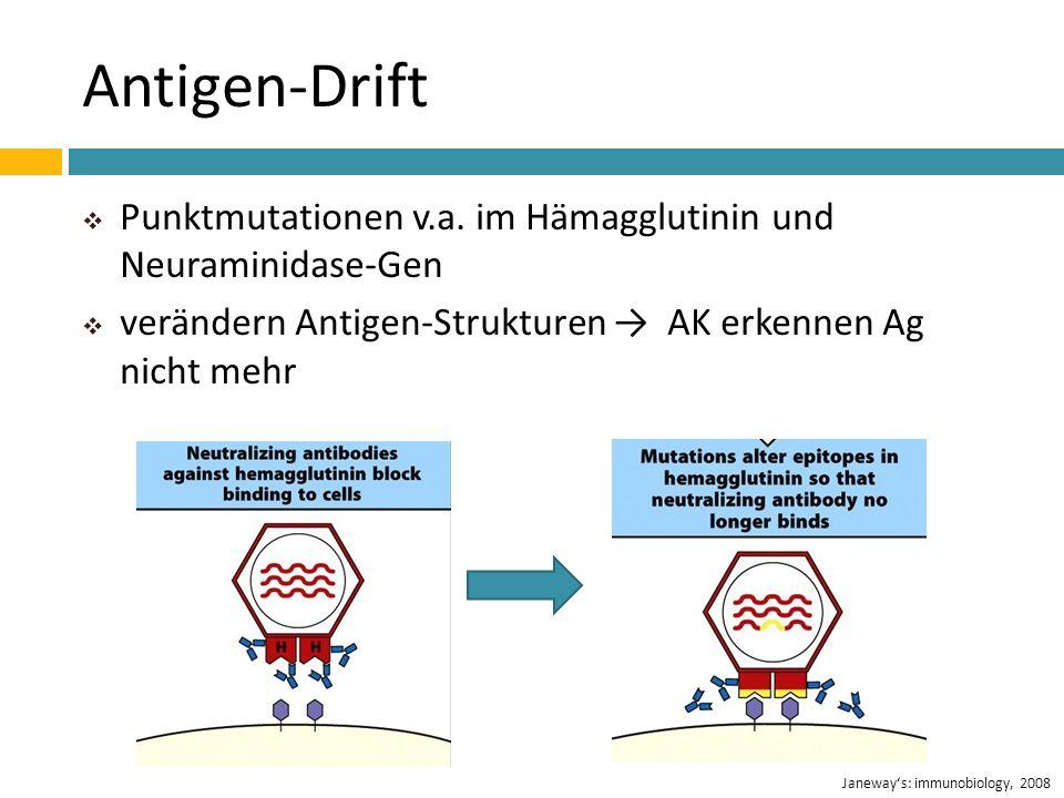 Antigen-DriftPunktmutationen v.a. im Hämagglutinin und Neuraminidase-Gen. verändern Antigen-Strukturen → AK erkennen Ag nicht mehr.