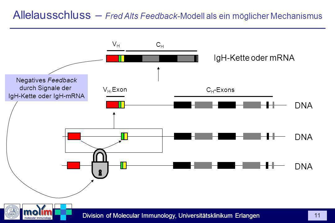 IgH-Kette oder IgH-mRNA