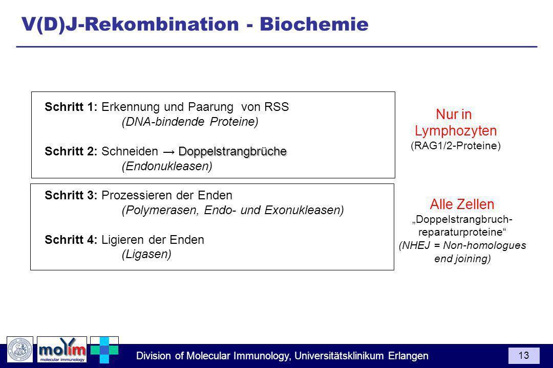 V(D)J-Rekombination - Biochemie