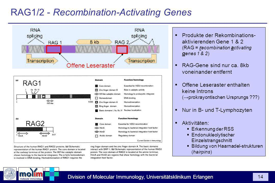 RAG1/2 - Recombination-Activating Genes