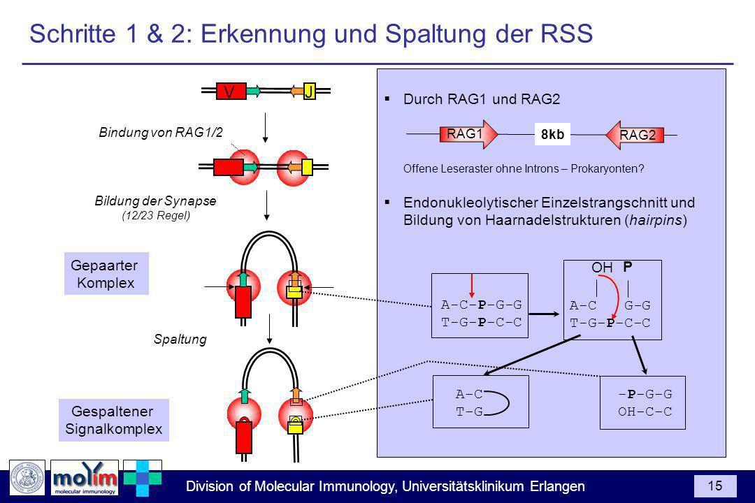 Schritte 1 & 2: Erkennung und Spaltung der RSS