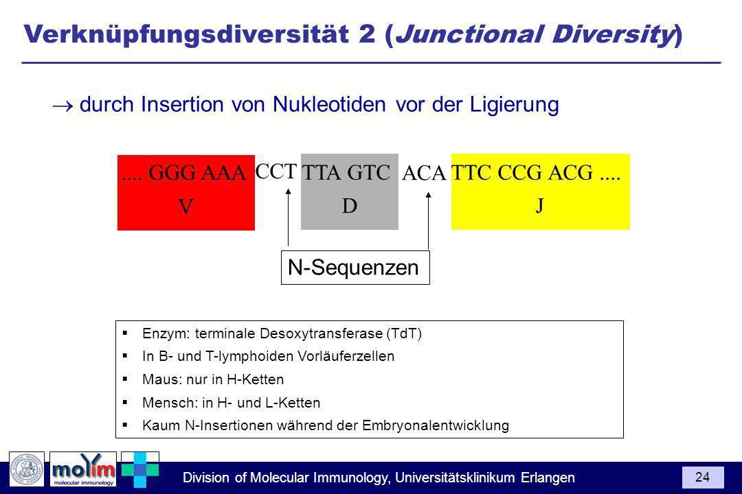 Verknüpfungsdiversität 2 (Junctional Diversity)